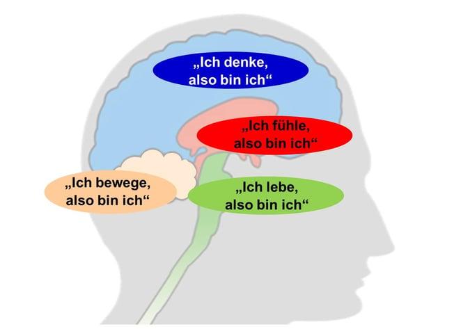Blog-34-2_Gehirn-WG_2021-04-28